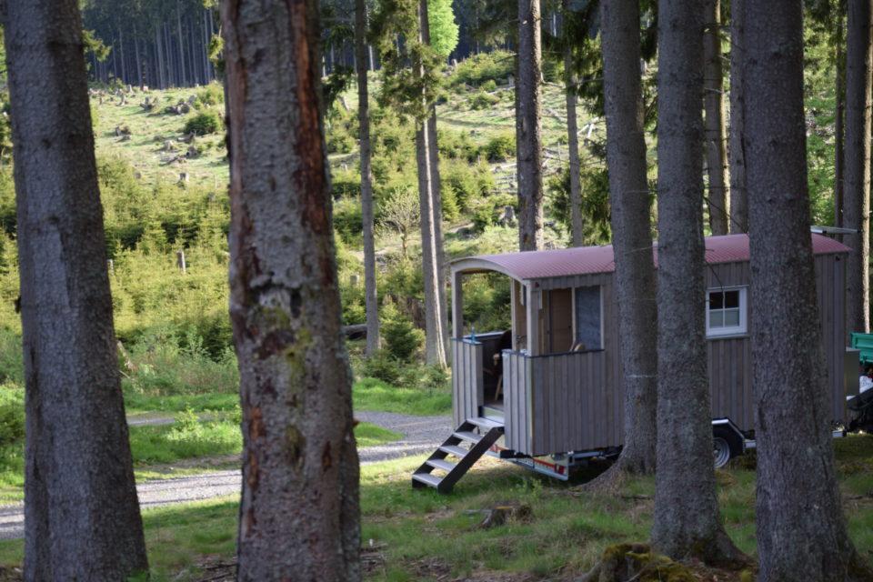 Schäferwagen in der Wisent-Wildnis