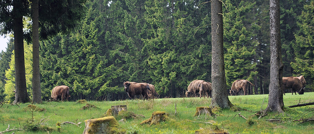 welcome_fruehling_3